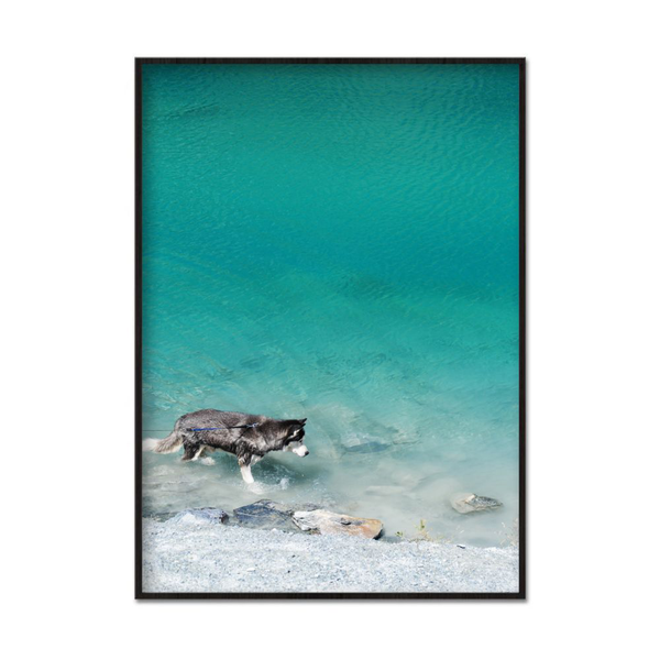 Poster A3 30x42cm Walking Dog In Water