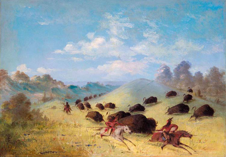 Comanche Indians Chasing Buffalo with,George with,George with,George Catlin,60x40cm fd6cb4
