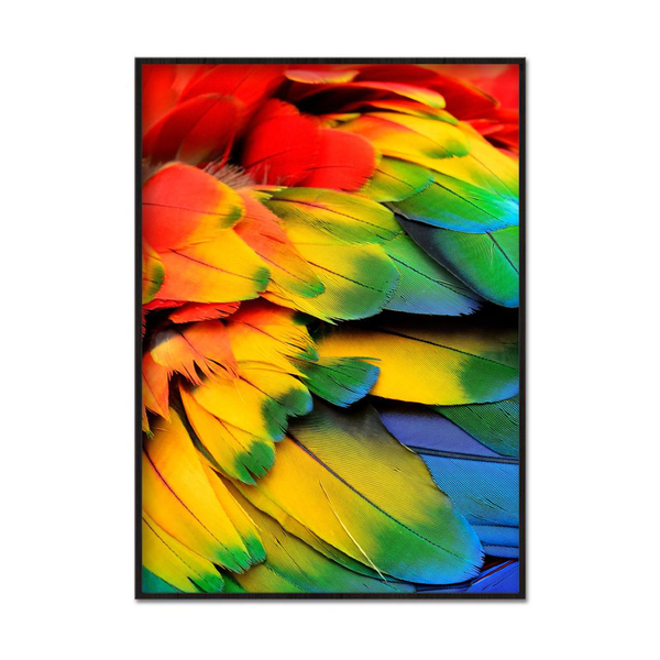 Poster A3 30x42cm Colorful Feathers
