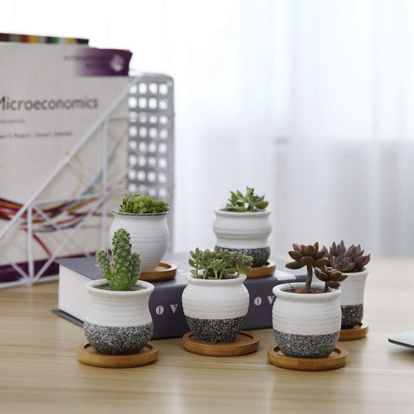 Succulent planters with bamboo coaster ceramic round set of 6 x