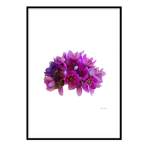Poster - Lila blomma A3 30x40cm