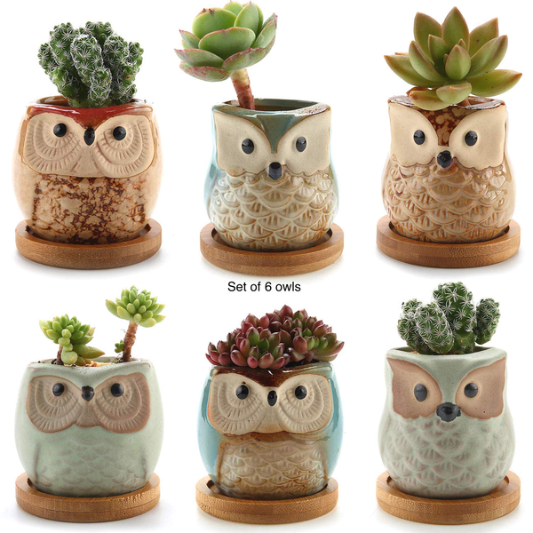 Succulent planters with bamboo coaster ceramic round set of 6,xs