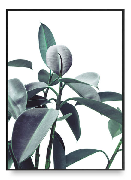 Ficus poster a4