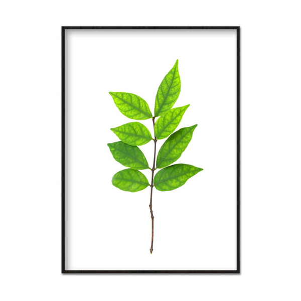 Poster A3 30x42cm Leaves