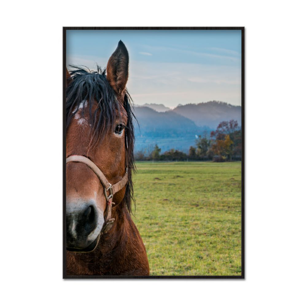 Poster A3 30x42cm Horse Scenery